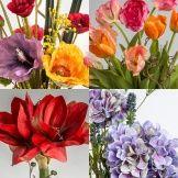Saisonales Blumenabonnement  (Blütenwerk-Cologne)